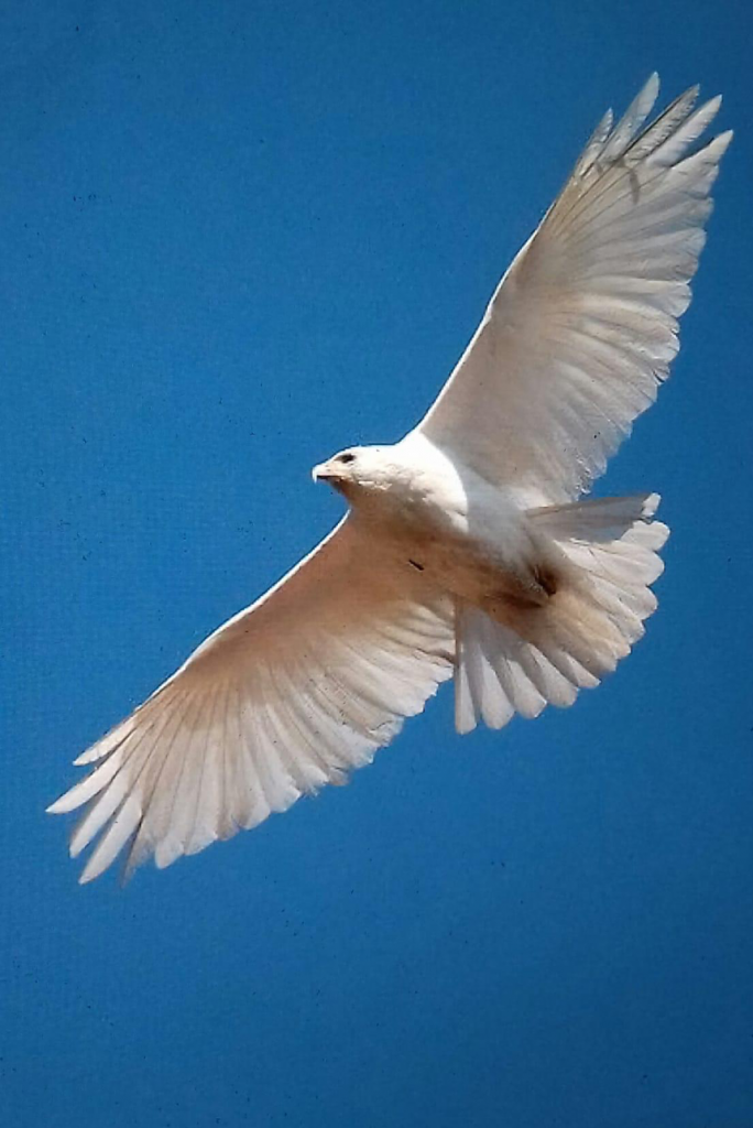 als een vogel in de wind